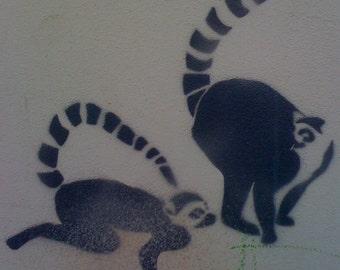 Monkey Love Graffiti Photo TEL AVIV Lemurs' L'Amour signed phipps y moran Flipping Gypsy Photography free mat Ready To Frame