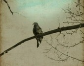 Baby Eagle on a branch 8x8 Fine Art Photograph