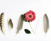 Feathers Art Modern Minimal Botanical 8x12 Archival Photograph