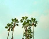 Palm Trees  Landscape 10x10 Photograph