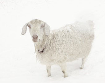 White Goat Art Fine Art Photography Snow Art Winter Art Snow Landscape Art Photography  Fine Art Photograph