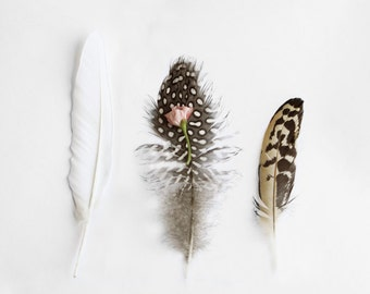 Feather Art Photography Three Feather and Pink Bud  Archival Photograph