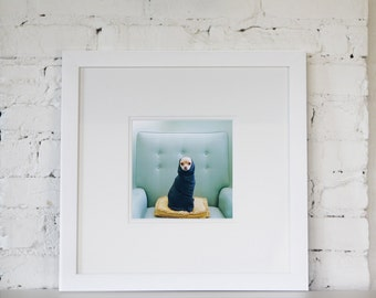 Chihuahua Art  Framed and Ready to Hang 16x16 inch Framed Photograph