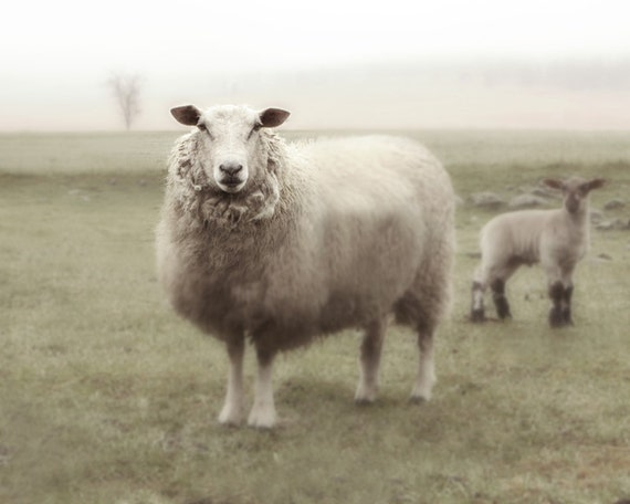 Sheep Art French Country Nursery Photo Fine Art Photography Ewe and Lamb in the Fog 8x10