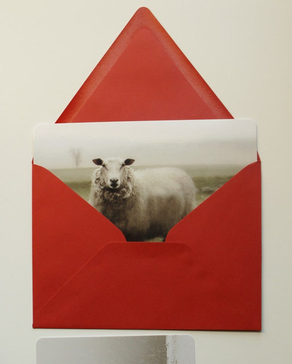 Christmas Cards Holiday Cards Sheep Art Red Stocking Stuffer