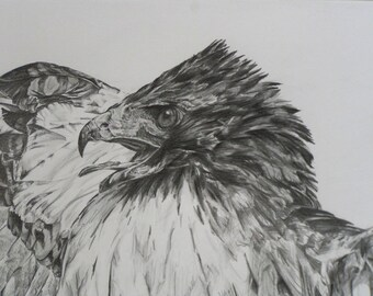 Sacha's Red-tailed Hawk-  Limited Edition Giclee print