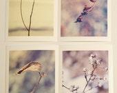 Macro Plants  4x6 fine art prints set of 4