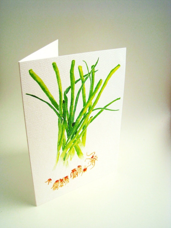 Green onion herd, print of original watercolor painting, set of 5 cards with envelopes, blank, any occasion greeting card