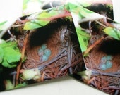 The Nest I  4 x 5.5 Blank Note Card Set