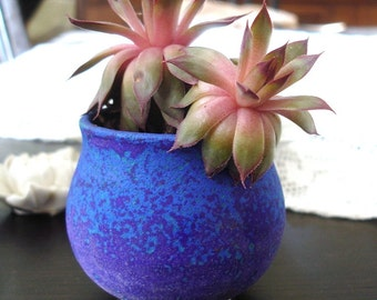 Ceramic Planter succulent planter Garden decor Velvet Purple Tea Cup cactus handmade wheel thrown round Clay Bowl Gift