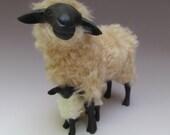 Italian Garfagnina  Black Sheep Straddling Lamb