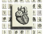 Vintage Anatomy (No. 1) - 75inx.83in Scrabble Size Image Tiles, Digital Collage Sheet PDF Images