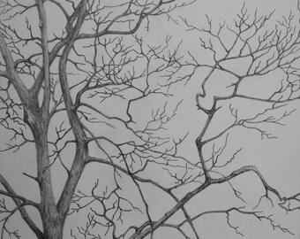 Graphite Drawing, Tree Study - Winter Hardwoods 1