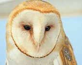 Barn Owl Photography, Soulful Bird, Blue Sky, Wildlife, Nature Photography