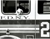 Black and White Photography of Dalmatian and an FDNY Firetruck