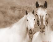 "Horse Photography white Horse portrait - sepia Horse Portrait- 5"" x 7"" Fine Art Print Metallic Colorado Rocky Mountains"