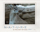 Majestic Mountain Lion All Occassion Card - 4x6 Print on 5x7 Card