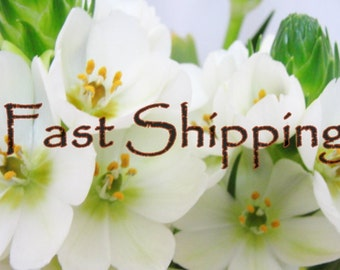 Fast Shipping Charge: 5-7 business day delivery from Shipping date