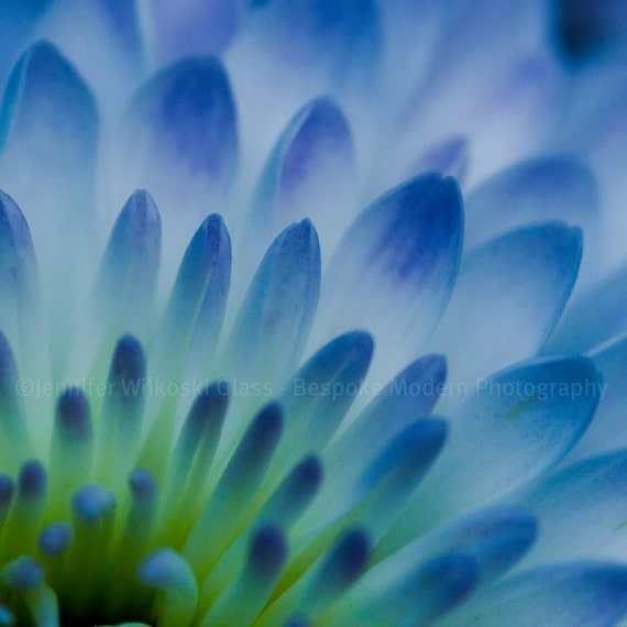 Blue Flower - Square Print - Includes FREE SHIPPING!