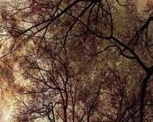 fireflies and stardust -a Metallic fine art nature photography print (8x8)
