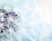Blue Dandelion Print, Pastel, White, Baby Neutral, Nursery Decor, Flower Photography, Dandelion Art, Boy or Girl