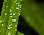 Dark Green Nature photograph, Botanical Gardens, Wall decor, rain drops, woodland wedding