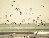 Beach Photography, Pale, Beige Wall Art, Nautical, Nature Photography, Birds, Ocean Print, Cottage Chic