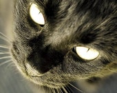 Black cat photograph, gold & black, Halloween Home Decor, dark, wall decor