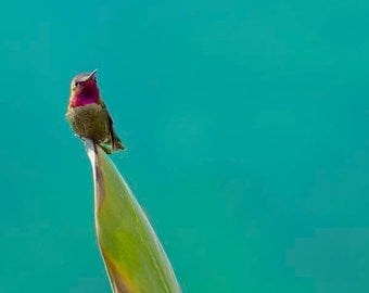 Hummingbird Print, Turquoise, Blue, Teal Wall Art, Red, Green, Tropical Decor, Nature Photography, Bird Photo