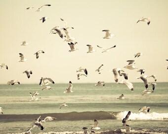 Neutral Beach Photography, Pale Beige Ocean, Birds Flight, Cream Beach, Malibu Beach, California Print, Pastel Faded