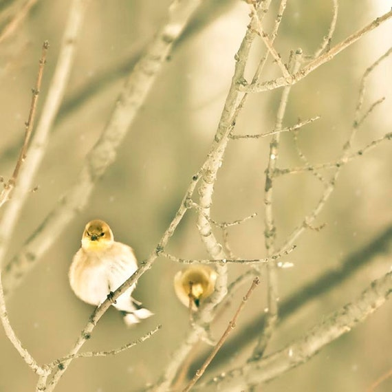 Bird Print, Goldfinch, Gray, Yellow, Woodland Nursery, Nature Photography, Goldfinch Print, Bird Photos