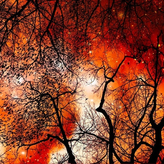 Surreal, Halloween, Orange & Black, Fine Art Print, Large Wall Art, Rustic, Spooky, Gothic, Fall, Nature Photography