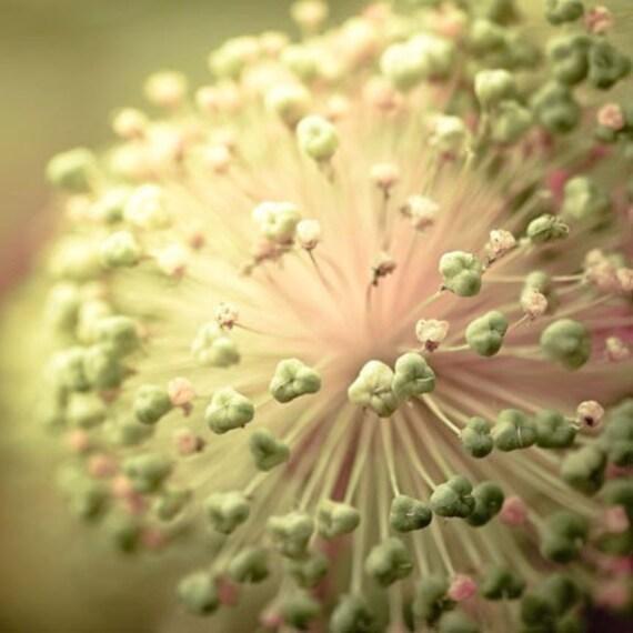 Flower Photography, Green, Pink, Flower Photo, Abstract, Modern, Flower Print, Shabby Chic Wall Art, Green Wall Decor