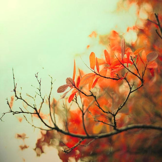 Nature Photography, Mint, Orange, Tree Branches, Rustic, Fall Leaves, Neutral Wall Art
