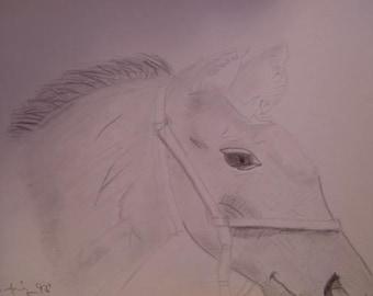 Pencil-Horse