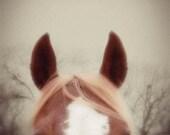 Horse Photograph  horse barn equine brown white portrait ears