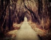 Dark Woods Photo - trees, path, forest, edgar allen poe, alice in wonderland, red riding hood 8x10 silk road inspiration