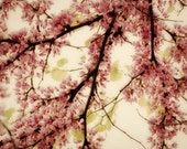 Tree Blossoms Photograph spring summer blossoms blooming pale pink peach nursery