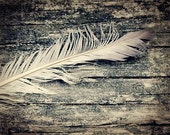 Feather Photograph rustic simple wood bird nature avian black and white sepia - FirstLightPhoto