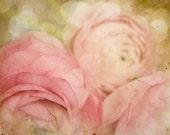 Pink Flower Photo Ranunculus vintage antique pale soft dreamy garden home decor