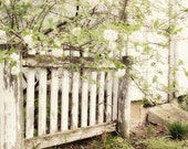 Picket Fence Photograph - white country shabby chic yard home quaint