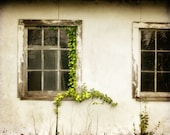 Country Cottage Photograph - quaint rustic green vine white old window rustic