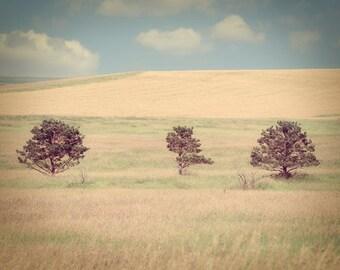 Prairie Field Landscape Photograph hay golden south dakota blue sky
