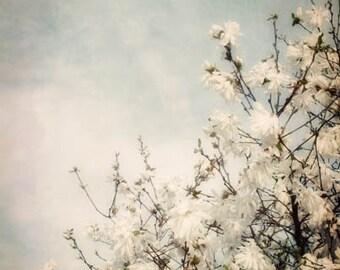 White Spring Blossoms Photograph - blue sky, spring, sunny, clouds