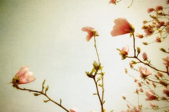 Spring Blossoms Photo - pastel blooming bush spring peach pink pale light 8x12