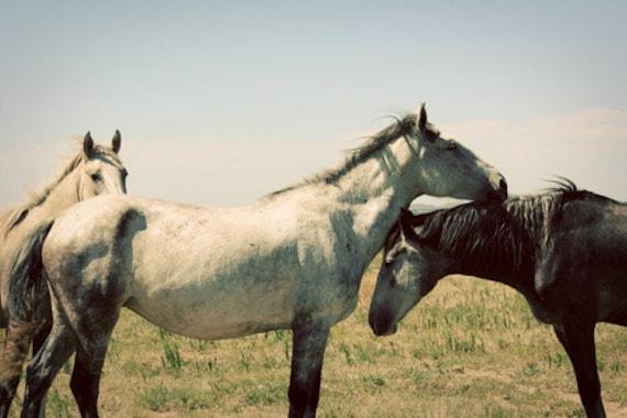 Horse Photograph - mustangs wild prairie free western white black prairie animal 8x12 companions