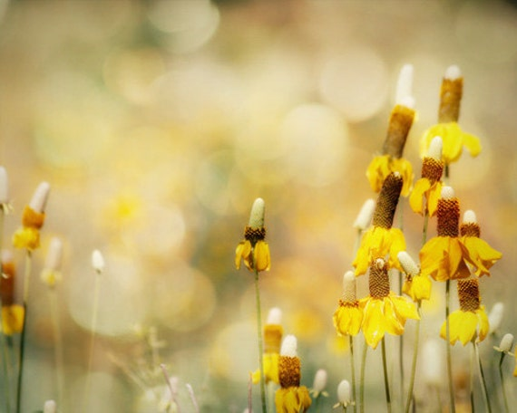 Yellow Prairie Flower Photography - wild flowers, South Dakota, green, bokeh, 8x10