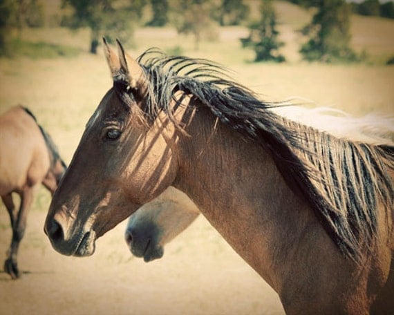 Horse Photograph - Wild Mustang, Brown - Free To Roam