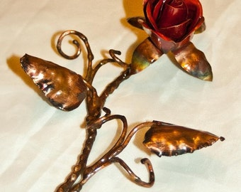 Copper Laying  Rose
