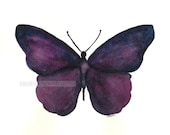 purple butterfly original watercolor  painting
